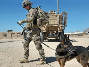 Heartless Obama admin puts 1,200 military dogs to death