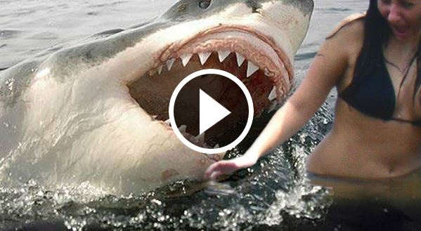 Shark eats a teenage girl in the ocean video | Cyberwarzone